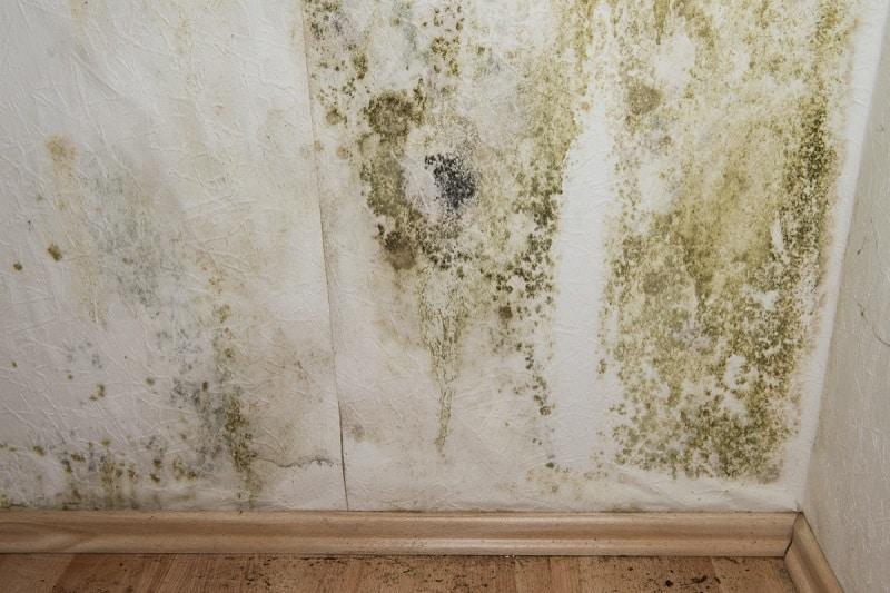 Masquer et nettoyer un mur taché par l'humidité