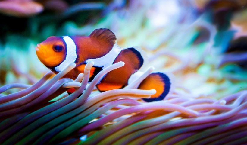Aquarium : modèles, conseils et prix.